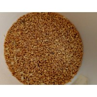 Unmalted Wheat                   1 ozs
