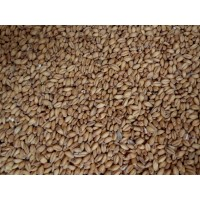 Malted White Wheat    1 oz