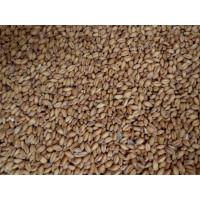 Malted White Wheat    1 oz