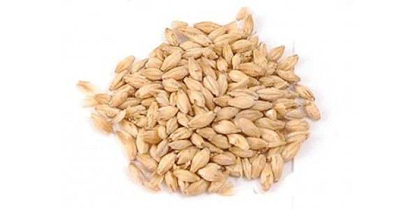 American 2 Row Brewers Malt - as low as 80 Cents per Pound