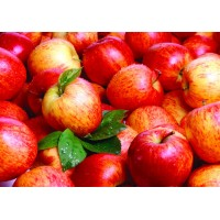 Vintner's Harvest Apple Solid Fruit Pack 96 oz