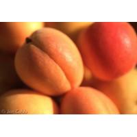 Apricot Fruit Wine Kit