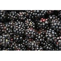 Blackberry Fruit Wine Kit