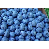 Blueberry Fruit Wine Kit