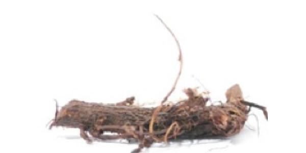 Hop Rhizomes Cascade